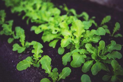 young-salad